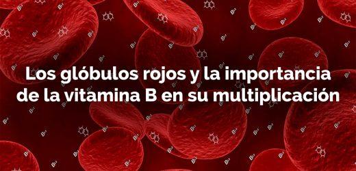 Aumenta tus glóbulos rojos con vitamina B12 en tu dieta